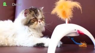 Интерактивные игрушки для кошек GiGwi Pet Droid