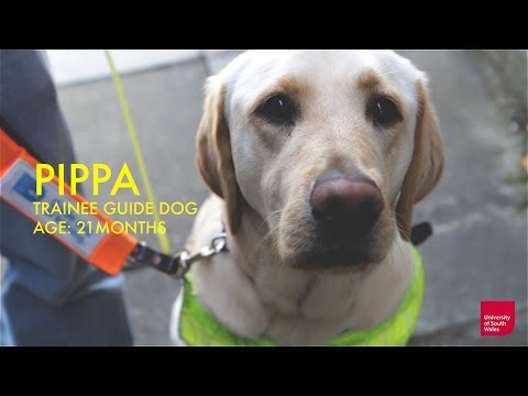 Guide Dogs Used to Train Police Science Students