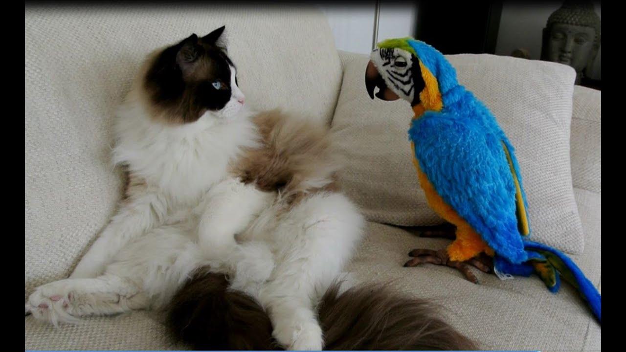 Parrot Cat Toy