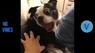 Funny Dog Vines Compilation 2020  Best Dog Vines