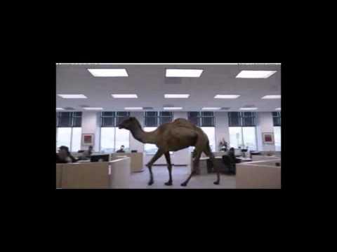 Entertainment Rental, Camel Rental, Animal Rentals Chicago, Fun Party Rentals, 1