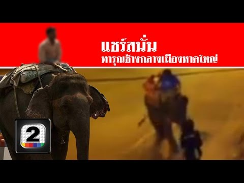 จวก!! ควาญช้างทารุณพลายวีโก้ ที่หาดใหญ่ สดใหม่ไทยแลนด์