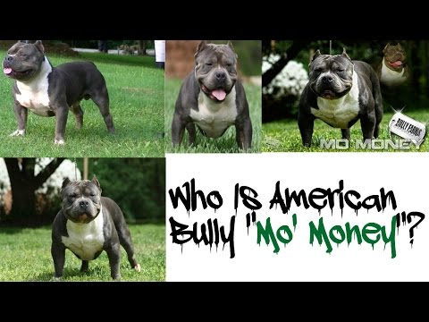 """Mo' Money"" The American Bully!!!"