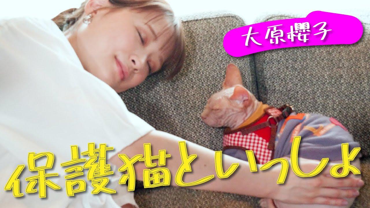 【保護猫】大原櫻子が「猫と犬の保護活動」を支援&子猫に名前をつけました【保護犬】