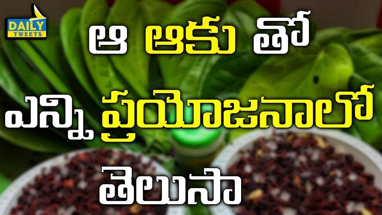 Benefits Betel Leafs And advantages of These Leafs  | Health tips || DailyTweets