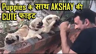 Video: Akshay Kumar boxing with puppies