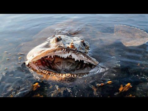 10 مخلوقات مرعبة تعيش في أعماق البحار  - 20:51-2019 / 10 / 19