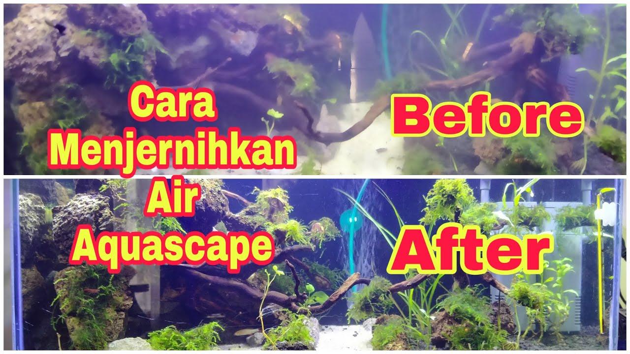 Cara mudah menjernihkan air aquascape dan air aquarium ...