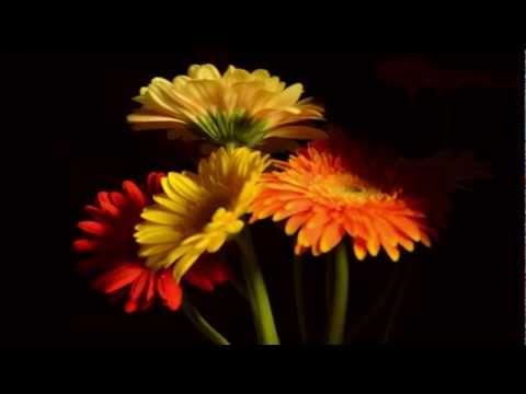 Key to hearts- Tamil song (ஒற்றைச் சொல்லில்)