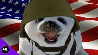Military Sea Lions! 5 Weird Animal Facts - Ep. 33 : AnimalBytesTV