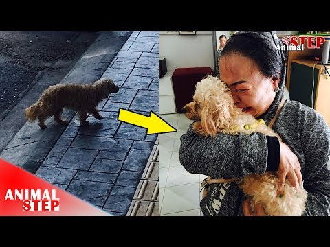 Dog Lost for Days is reunited with Owner after Saved by Rescuers