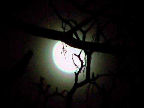 Shadows of the Night Lyrics