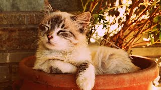 10 HOURS of Relaxing Music for Cats