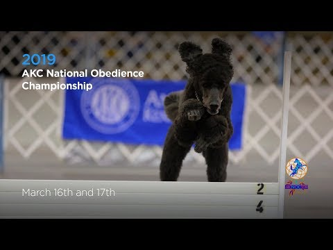 AKC National Obedience Championship! AKC.TV Ring 1 And Ring 8 - March 17 2019