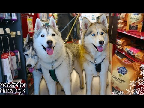 dogs-go-shopping-at-petco
