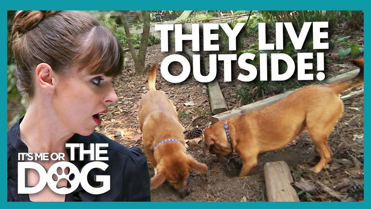 Dogs Left in the Garden All Day Don't Know Their Own Names! | It's Me or the Dog