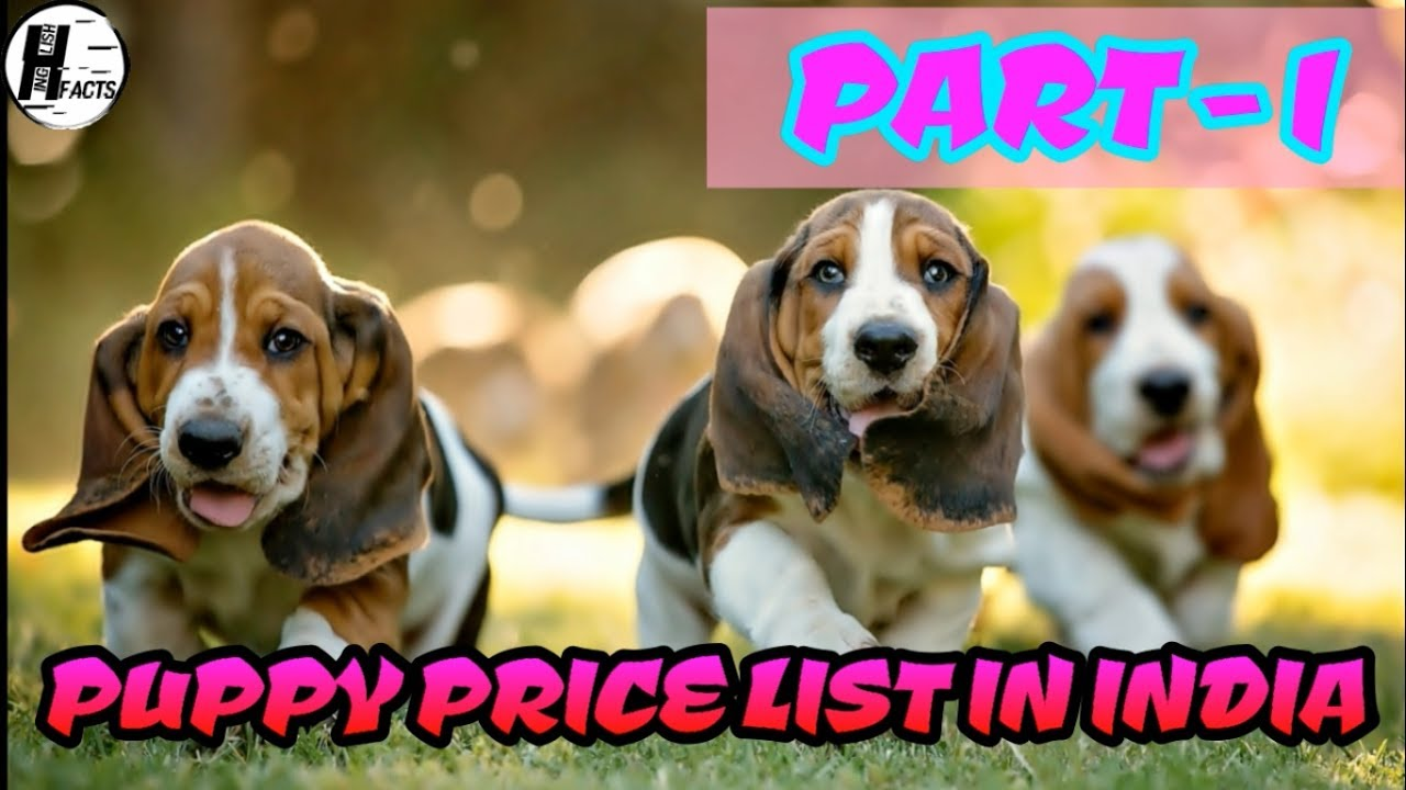 Dog Price List In India Part 1