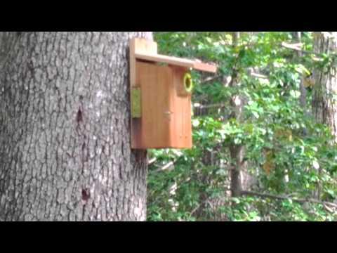 Bird house occupation