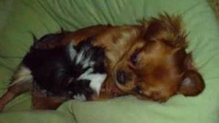 Mein Hund Balu