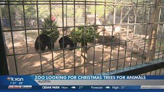 PHOTOS: Animals explore donated Christmas trees at Austin Zoo