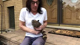 NEVER TRUST A RACCOON! - Johnny Monaco