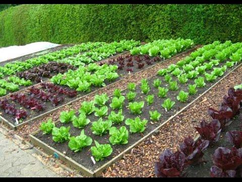 Charmant Vegetable Garden