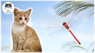 고양이가 좋아하는 영상[VIDEO FOR CAT]