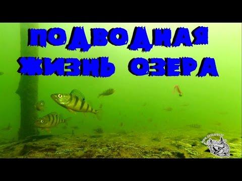 Подводная жизнь в озере.