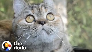 This Cat Rides Shotgun With Her Truck Driver Dad Every Single Day | The Dodo