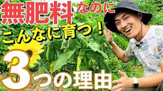肥料が絶対必要は思い込み!無肥料でも育つ3つの理由!【自然農】