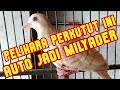Ciri Perkutut Udan Mas Yang Asli  No Bokis  Mp3 - Mp4 Download