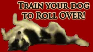 Train Your Dog To Roll Over - Clicker Dog Training