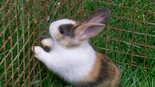 Красивые Породы Домашних Кроликов. Великаны, Белые, Бурые. Кролиководство в Домашних Условиях