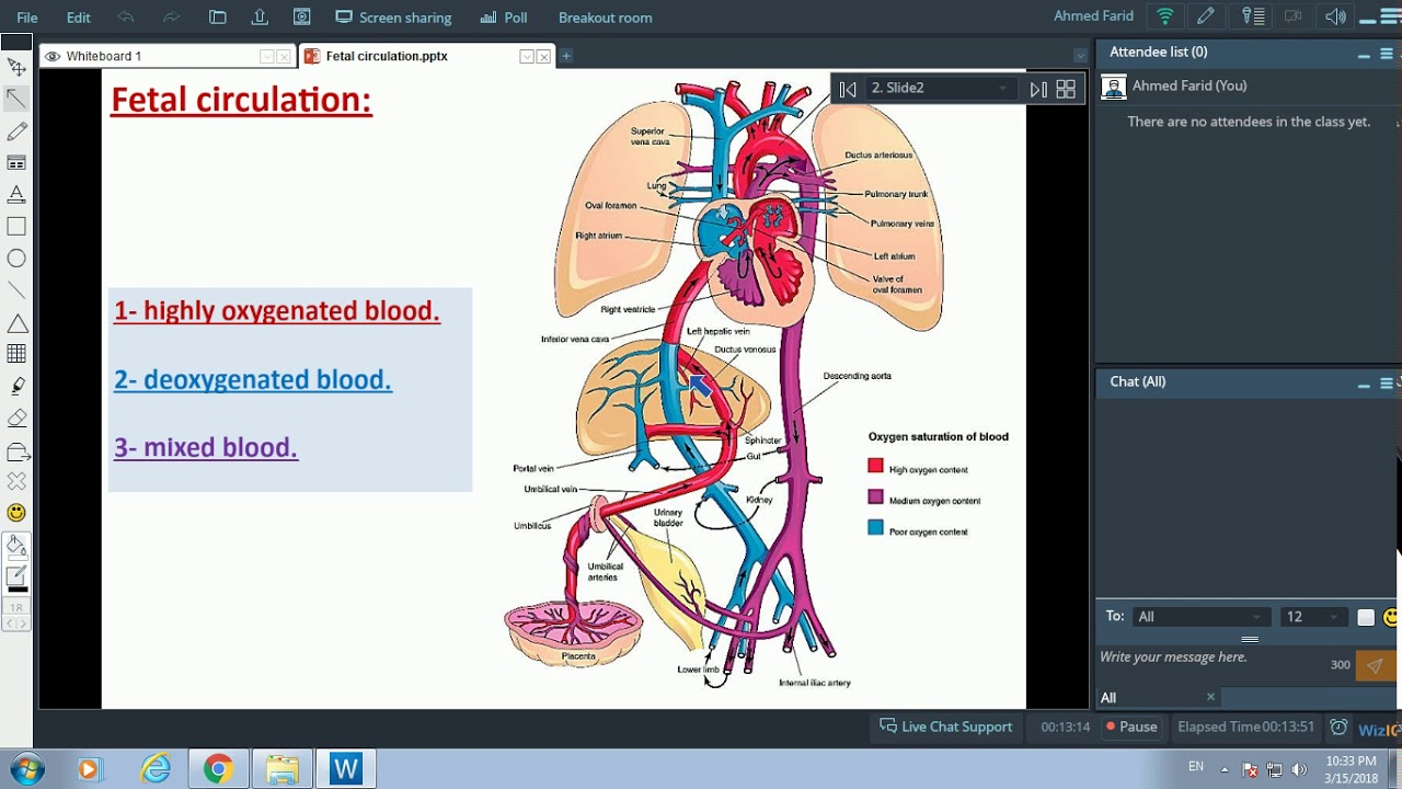 Fetal Circulation - Dr. Ahmed Farid - YouTube