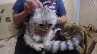 Блохи у Кошки 😻 Кошка заболела? Что делать если нашли блохи  🐱 Видео про котов Играем в доктора