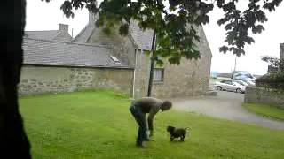 Play With Quinie - Staffordshire Bullterrier