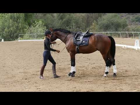 Saftey Tips For A Young Horse: Bending And Yeilding