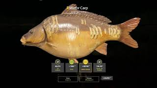 Russian Fishing 4 Trophy Mirror Carp at The Amber lake