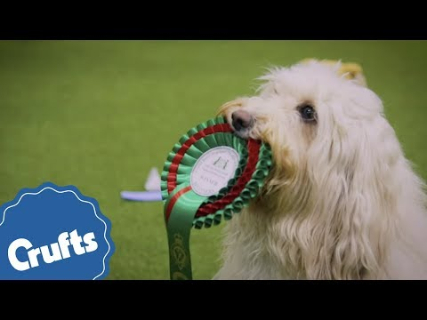 Crufts 2019 is coming!