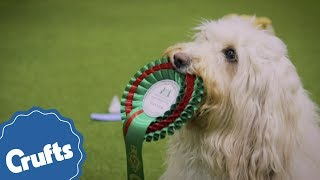 crufts-2019-is-coming