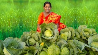 Tasty Cabbage Curry with Simple Recipe for Kids || My Aunty || Village Kitchen