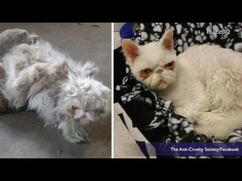 Amazing Transformation of Cat Found with 5 Pounds of Matted Fur