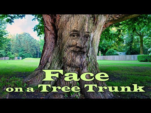 Photoshop: How To Create A Face On A Tree.