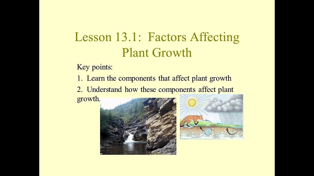 bdf53694c2 Science 10: Factors Affecting Plant Growth - YouTube