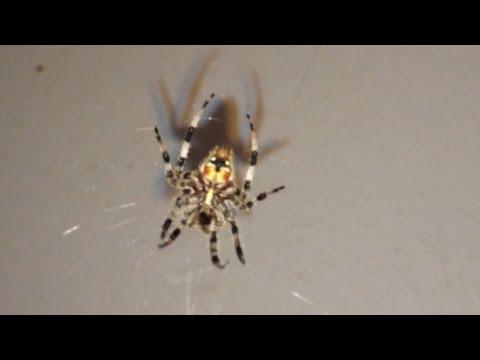 ArachnoFiles: A Collage