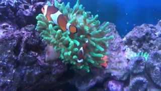 Мой морской аквариум(, 2015-06-29T17:10:33.000Z)