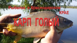 Рыбалка в Краснодарском крае Сезон 1 Серия 1 КамышЫ