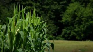 This Week In Real Life - Uxbridge Farms