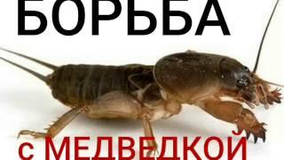 видео Регент от колорадского жука: инструкция по применению