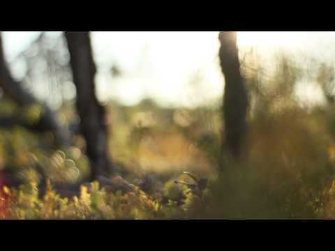 Дикая природа. Северная Карелия. Wild Karelia streaming vf